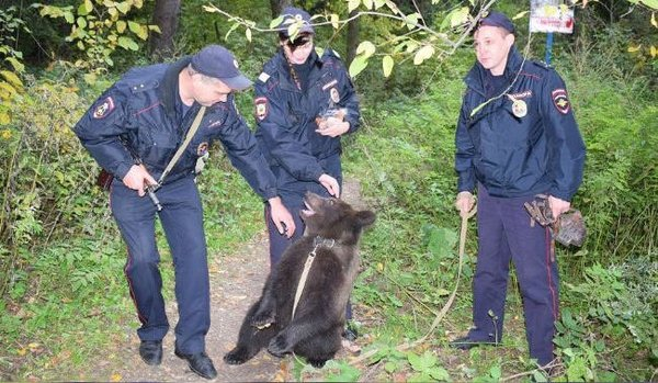 In case you didn't know this is how typical police dog looks in Russia. Россия, Полиция, Медведь, Клюква, Фото