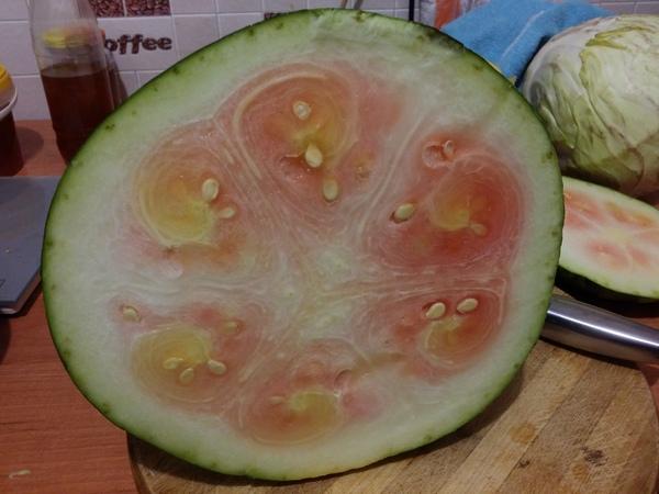 Купил арбузик :( Арбуз, Зеленый, Облом