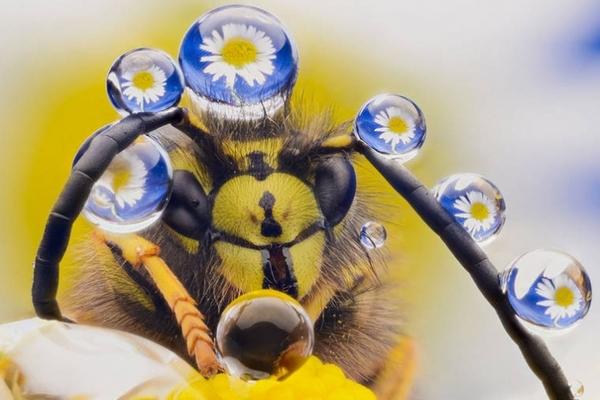 Лучшие работы с конкурса самых забавных фотографий животных этого года «Comedy Wildlife 2016» Природа, Юмор, Фотоконкурс, Длиннопост