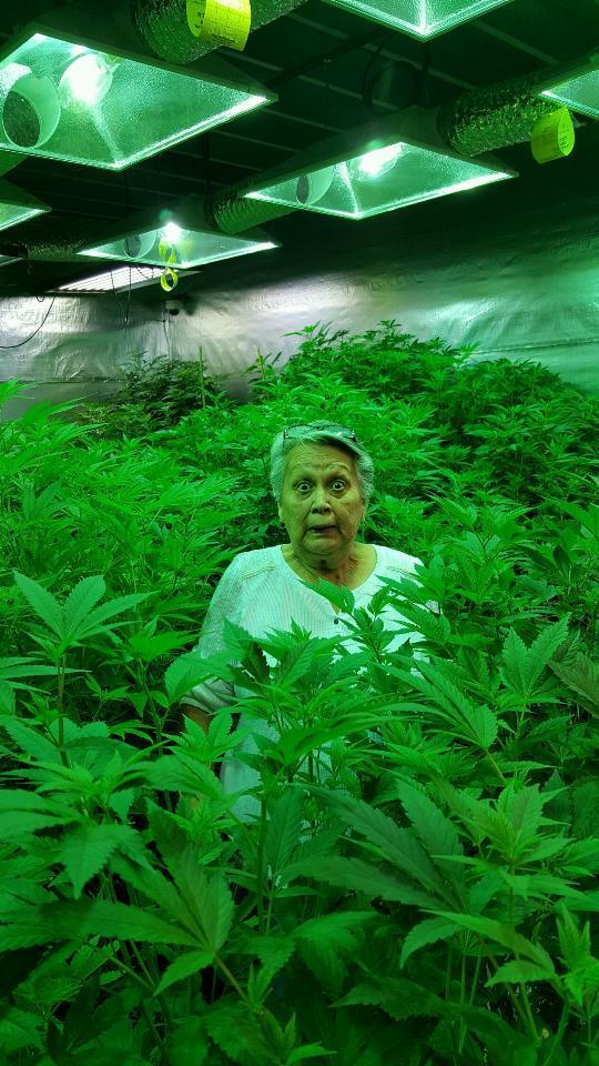 Фото бабка с коноплей тест на марихуану спб купить