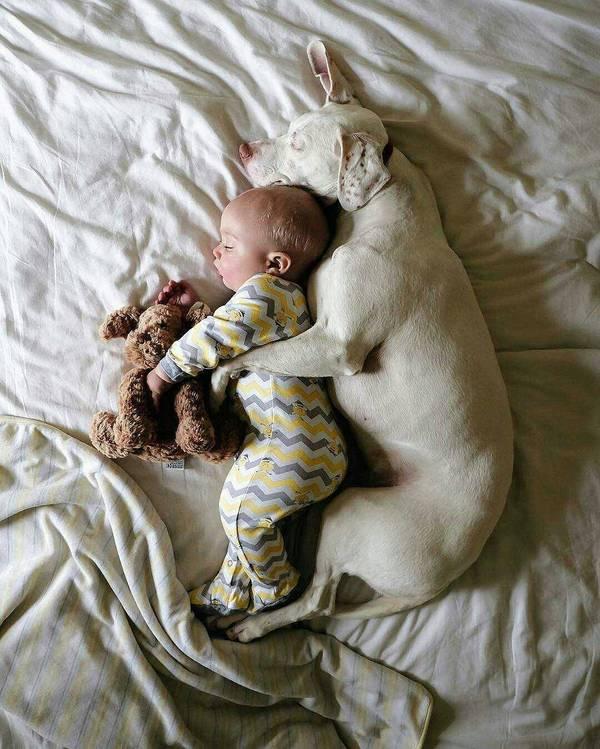 Охраняет сон