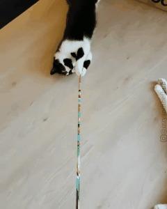 Блин, кот, в эту игру нужно играть по-другому!