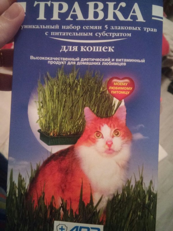 Травка для кота Кот, Травка, Странные губы, Или, Странная трава, Корм, Длиннопост