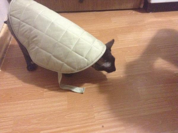 Единственный подписчик, лови кот, черепаха, мой первый подписчик, Зачем ты здесь, ты заходи если что