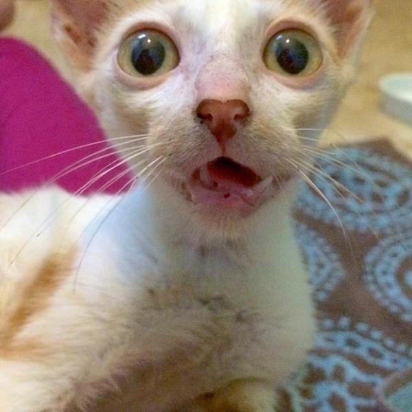 Ветеринар хотел усыпить его, но любовь и забота в который раз сотворили чудо! Кот, Добро, Любовь, Забота, Длиннопост, Жесть