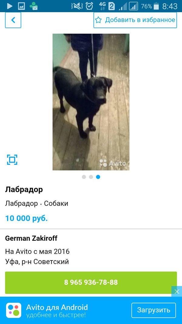 Собаки на самовыгуле Собака, Авито, Уфа, Потерялась, Найдено