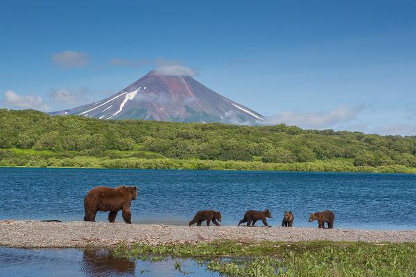 Уникальная Камчатка. Продолжение. камчатка, вулкан, медведь, природа, извержение, пещера, длиннопост