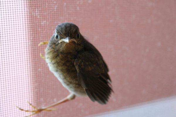 Маленькие гости. ласка, птицы, КБР, Махачкала, Животные