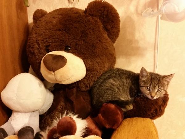 Пикабу, найди хозяев для кошечки! Кот, Ищу хозяина, Кошка ищет дом, Мурчалка