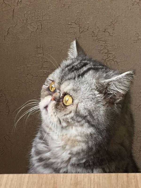 Выражение лица моего кота Кот, Бублики, Лицо, Длиннопост