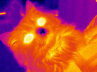 Тепловизор Тепловизор, Тэц-20, Кот, Человеческое тепло, Длиннопост