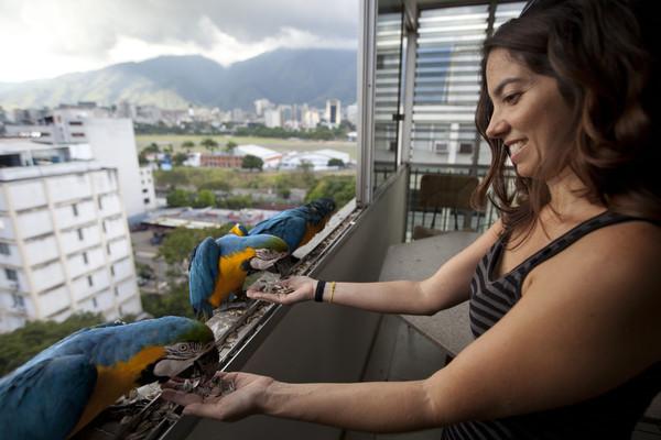 В каждой стране свои голуби Венесуэла, Каракас, Попугаи ара, Попугай, Голубь, Длиннопост