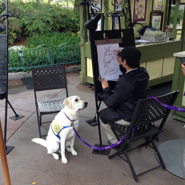 Кто-то делал карикатуру служебной собаки в Диснейленде.