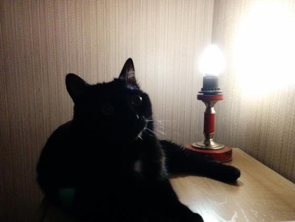 Немного странных и страшных снов. Сон, Ужасы, Кошмар, Странности, Вот это поворот, Длиннопост, Кот, Кот с лампой