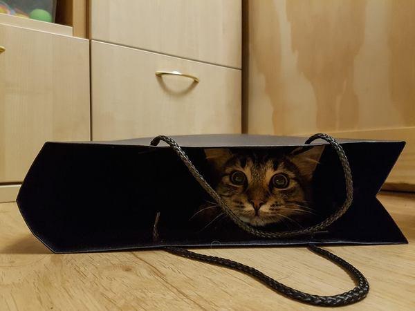 Карманник (Кот в мешке) Карманник, Индия, Видео, Мото, Кот, Фото