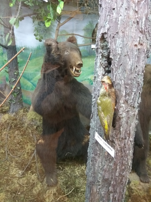 Чучело медведя наводит ужас Чучело, Медведь, Краеведческий музей