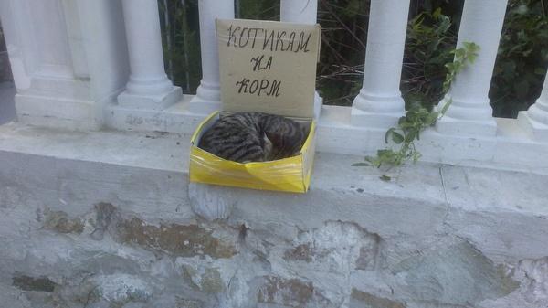 Весь день не спишь, всю ночь не ешь, конечно устаешь Кот, Ялта, Набережная, Коробка, Попрошайки
