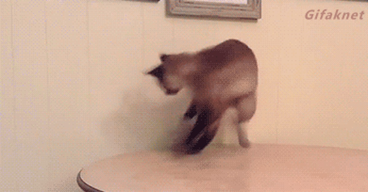 собака садится на кота гифка