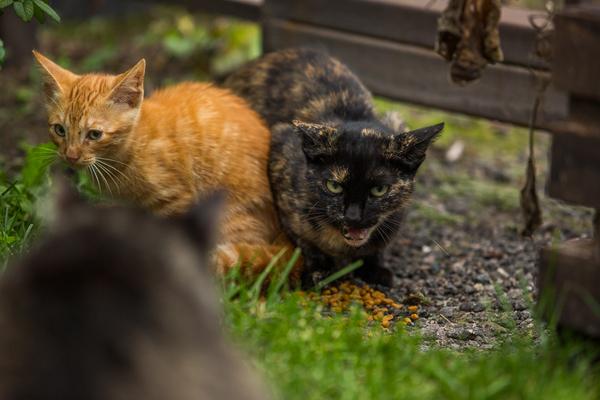 tortie cat behavior