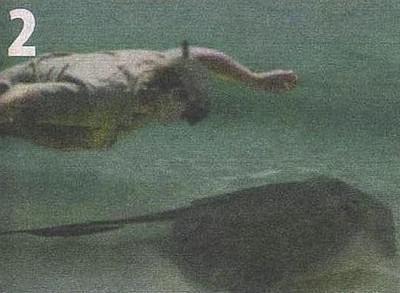 Прошло уже 10 лет... Стив Ирвин, Природа, Животные, Натуралист, Помним, Смерть