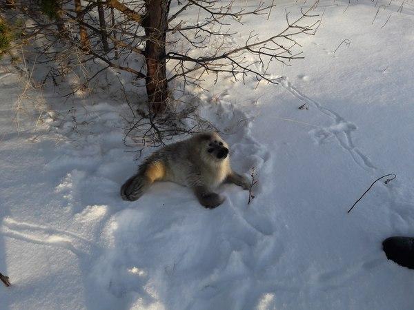 Так вот ты какой, первый снег. Белое море, Побережье