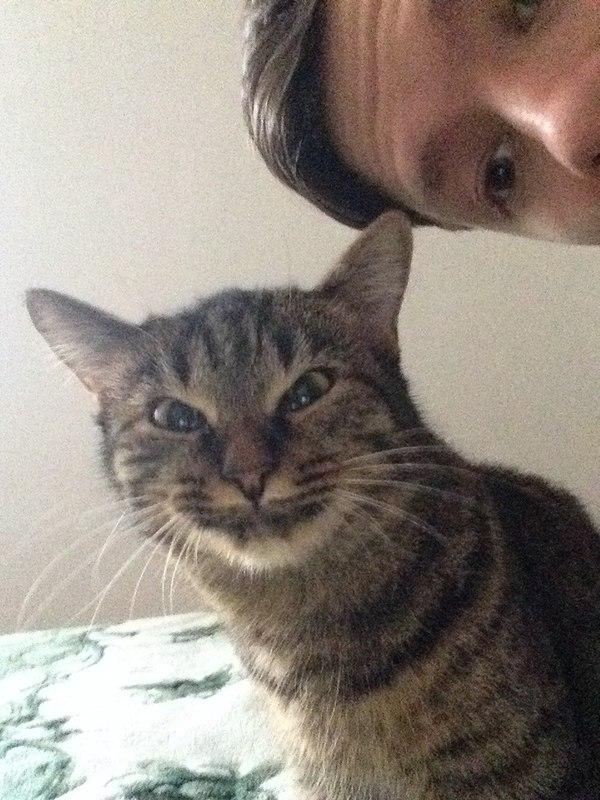 Когда попросили сделать нормальное выражение морды для фото кот, улыбка, неловкость