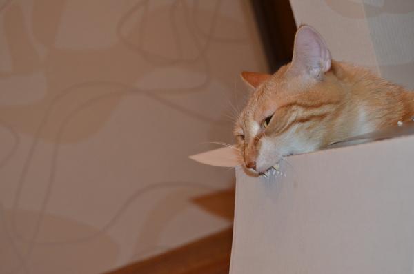 Говорят, что питомцы очень похожи на своих хозяев кот, Фото, дракула, питомец