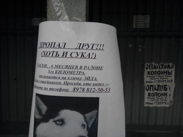 Но друг! Объявление, Пропала собака
