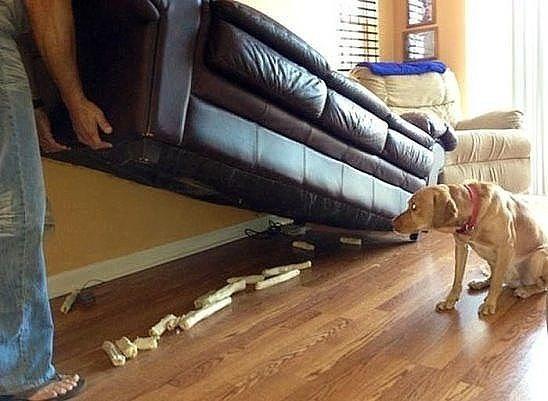 Если бы полковник Захарченко был собакой...