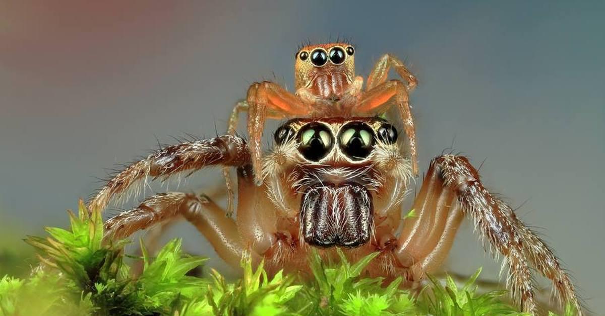 Романтический, картинка паук прикол