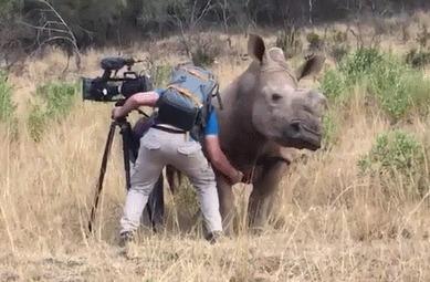 Хочешь жить - умей чесать Носорог, Оператор, Африка, Гифка