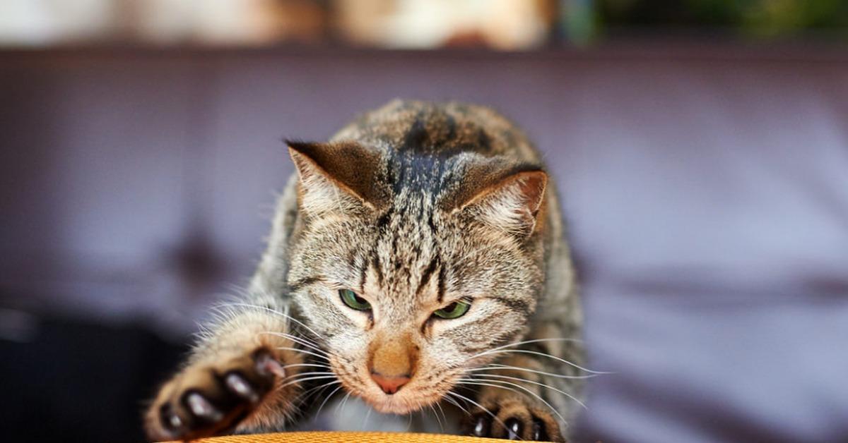 Кошка с котенком картинка для занятий прекрасно