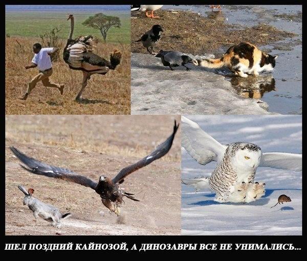 Немного палеонтологического юмора Юмор, Палеонтология, Птицы, Динозавры, Кайнозой