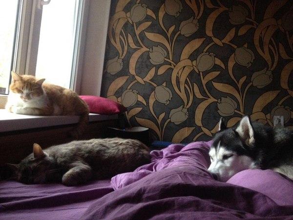 Когда до будильника не дотянуться Коты и собаки вместе, Утро, Сон, Работа, Собака, Кот