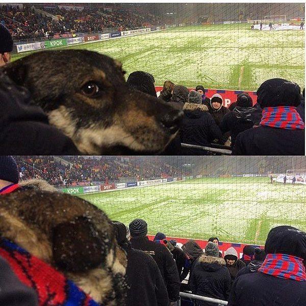 Хозяин взял на футбол