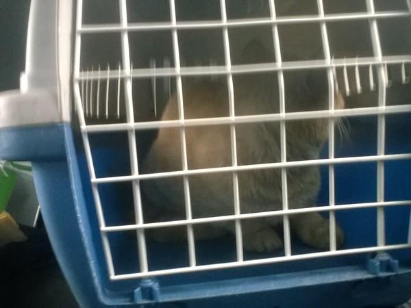 Найден кот Кот, Найдено