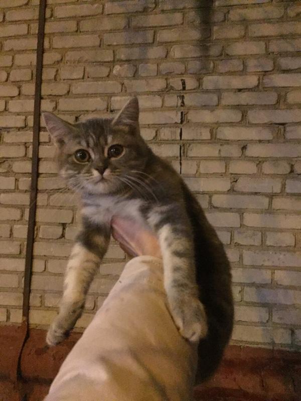 Домодедово, найдена кошка домодедово, кошка пропала, ищу хозяина