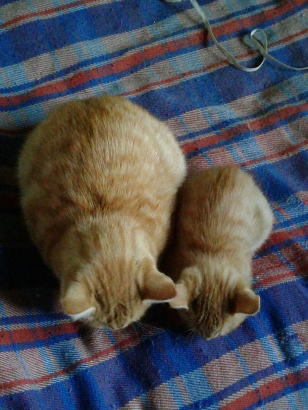 Эффект клонирования Кот, Клонирование, Длиннопост