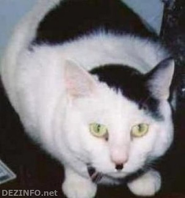 Кошка - Гитлер кот, Адольф Гитлер