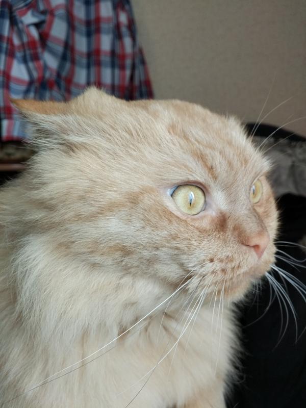 Просто мой Котя увидел птичек на снегу. Кот, Мой кот в шоке, Длиннопост