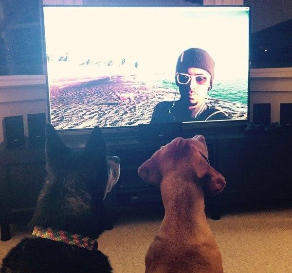 2 Dogs Watch Watch Dogs 2