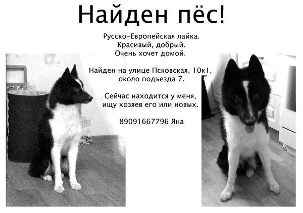 Нашли собакена Лайка, Найдена собака, Алтуфьево, Потеря, Собака, Помощь