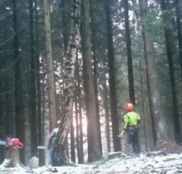 Быстрая вырубка леса Лес, Лесоруб, Дерево, Гифка
