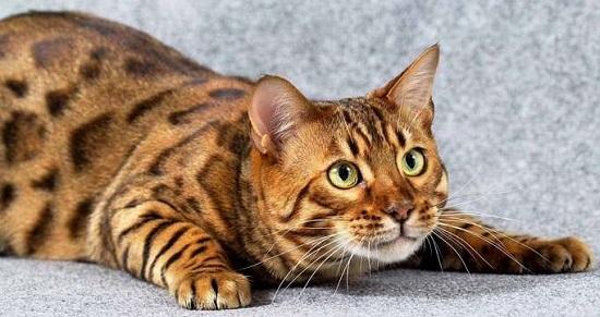 смотреть породы кошек фото