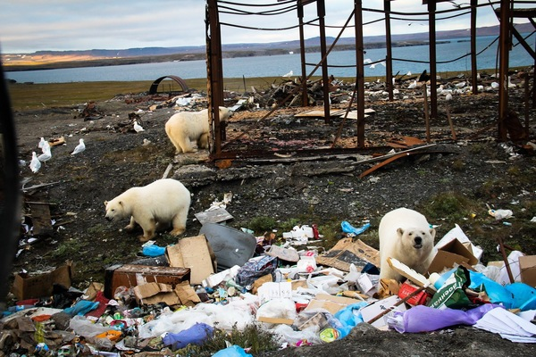 Новая Земля, моё Белый медведь, Мишки, Север, Мусор