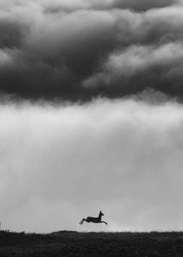 Косуля бегущая по перевалу Косуля, Облака, Перевал, Крым, Горы, Чатыр-Даг, Природа, Животные