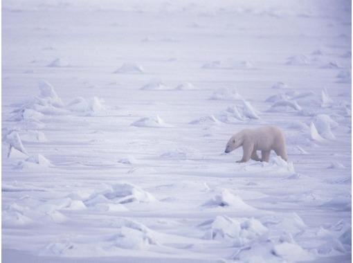 В последнее время Брррр, Снег, Сугроб, Белые мать их медведи!