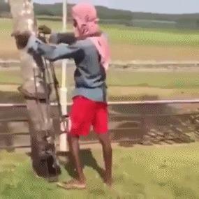 Необычное изобретение для собирания урожая с деревьев