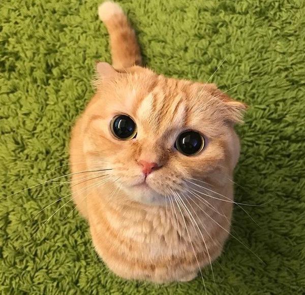 фото кота со шрека