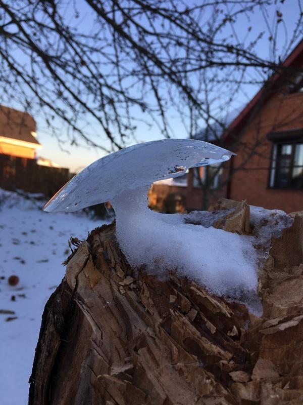 Ледяной гриб Гололёд, Грибы, Лёд, Природа